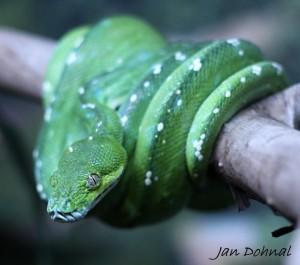 Snake at paphos zoo
