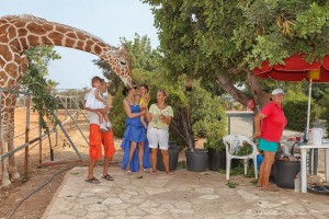 Giraffes at paphos zoo