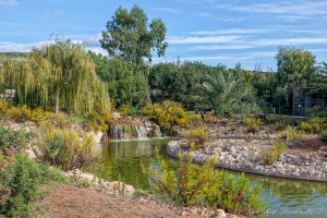 Paphos zoo pond